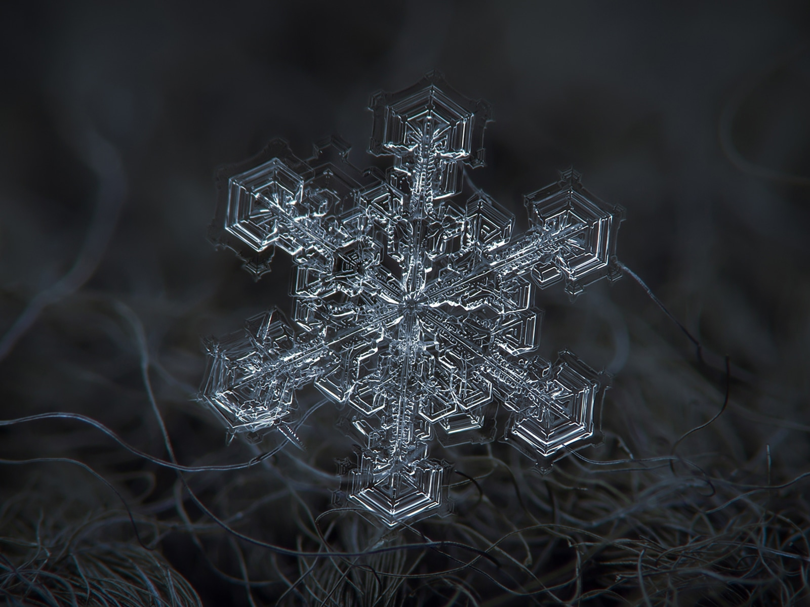photographer captures snowflakes in stunning detail today com