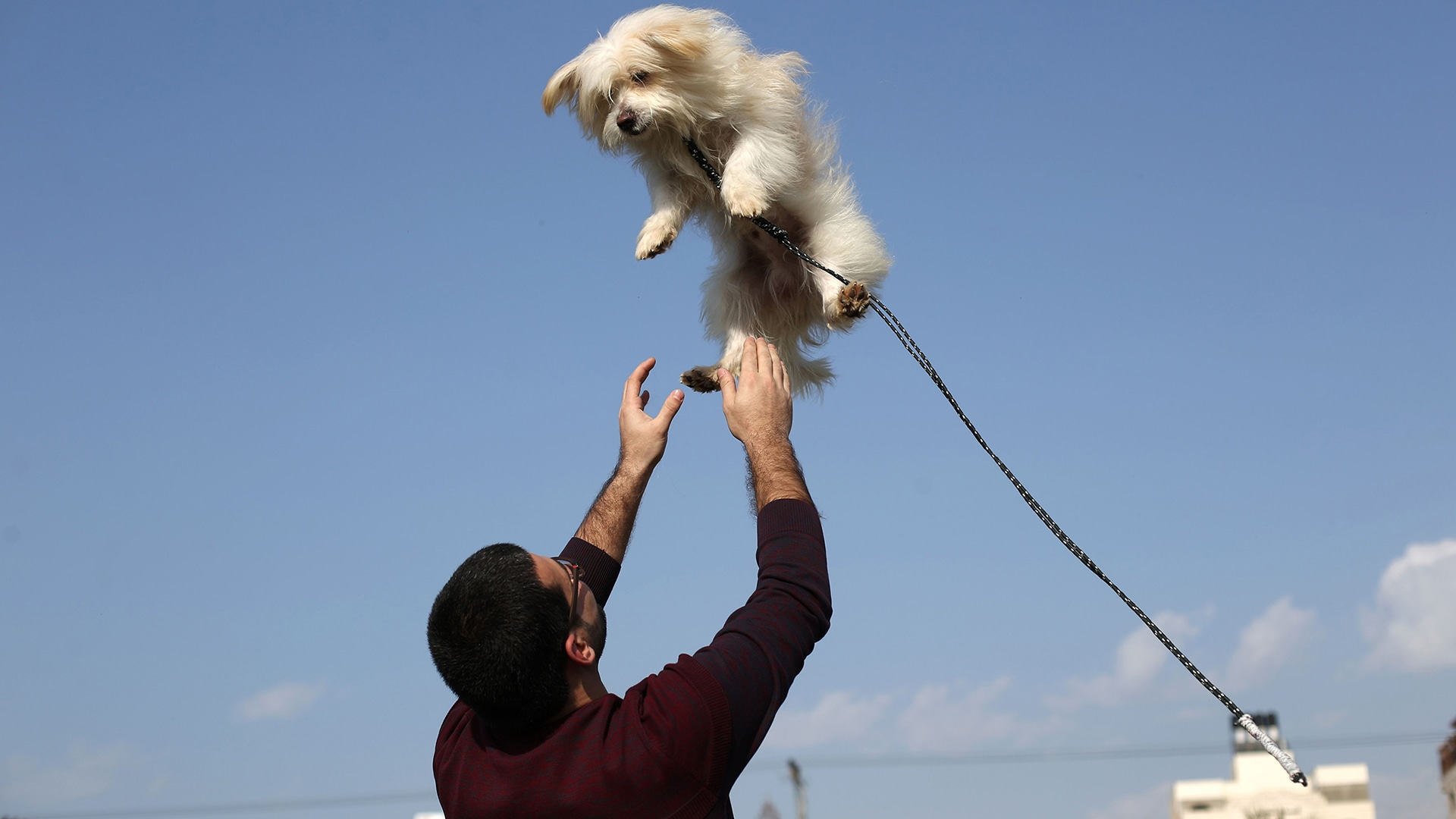 A Palestinian man plays with a dog during the first dog show in Gaza City