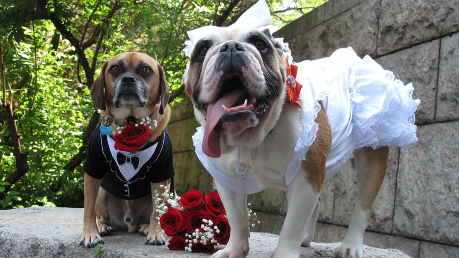 'You may sniff the bride': New movie celebrates dog ...