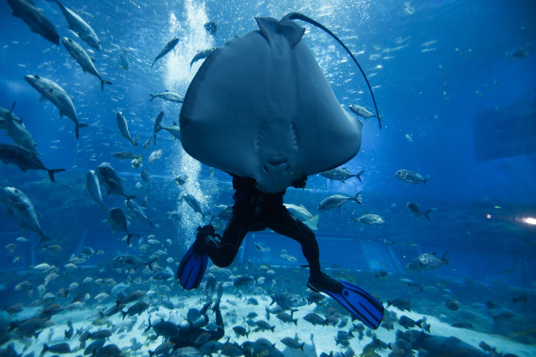 sea creatures and more in this week u0027s best animal pictures today com