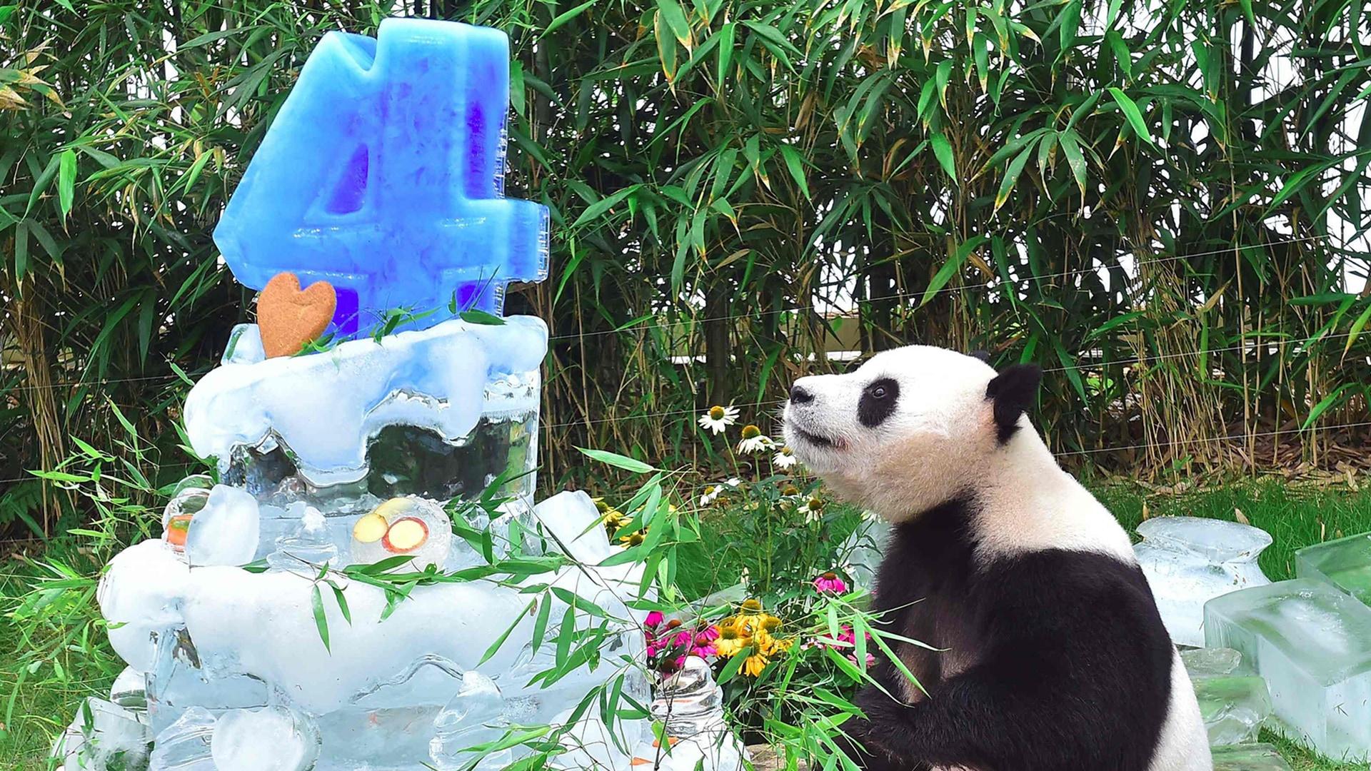 Image: TOPSHOT-SKOREA-CHINA-DIPLOMACY-ANIMAL-PANDA