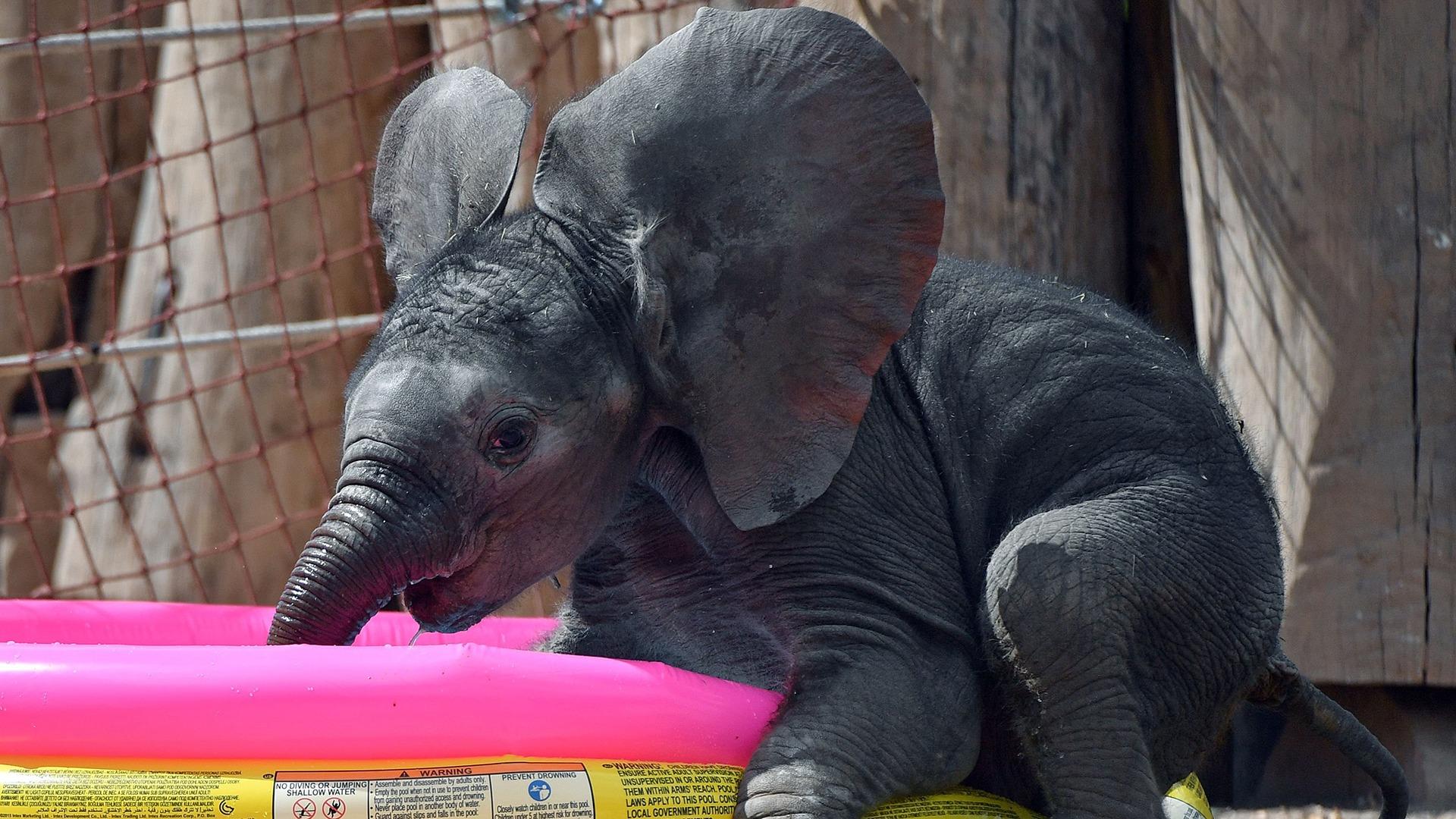 Image: GERMANY-ANIMALS-ZOO-ELEPHANT