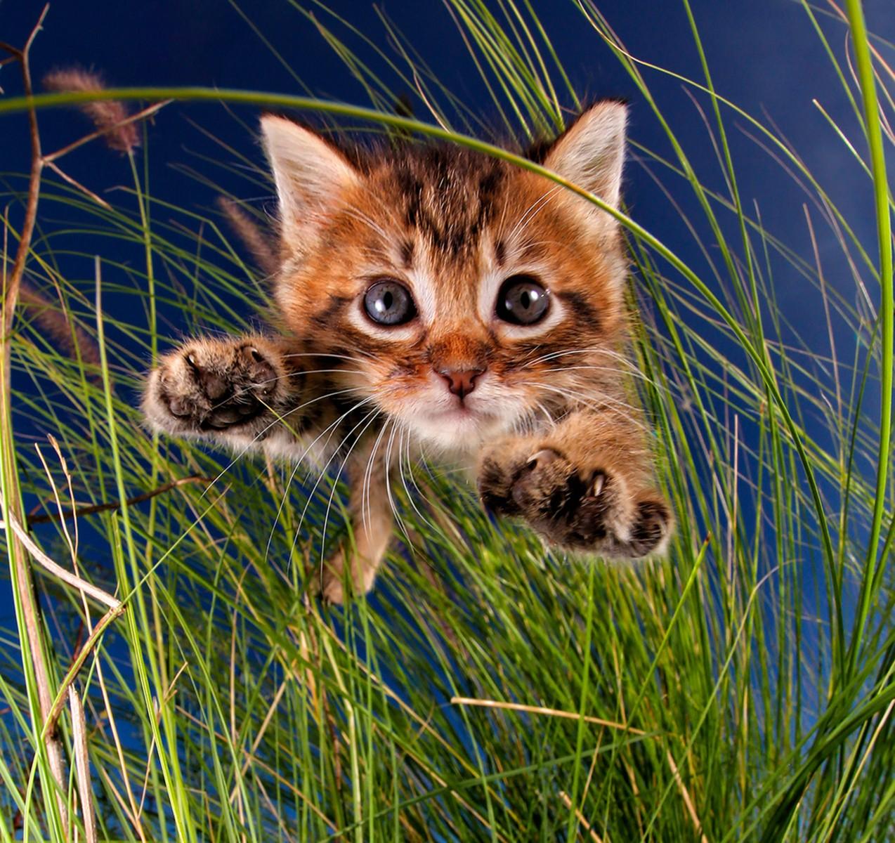 cat cartoon images