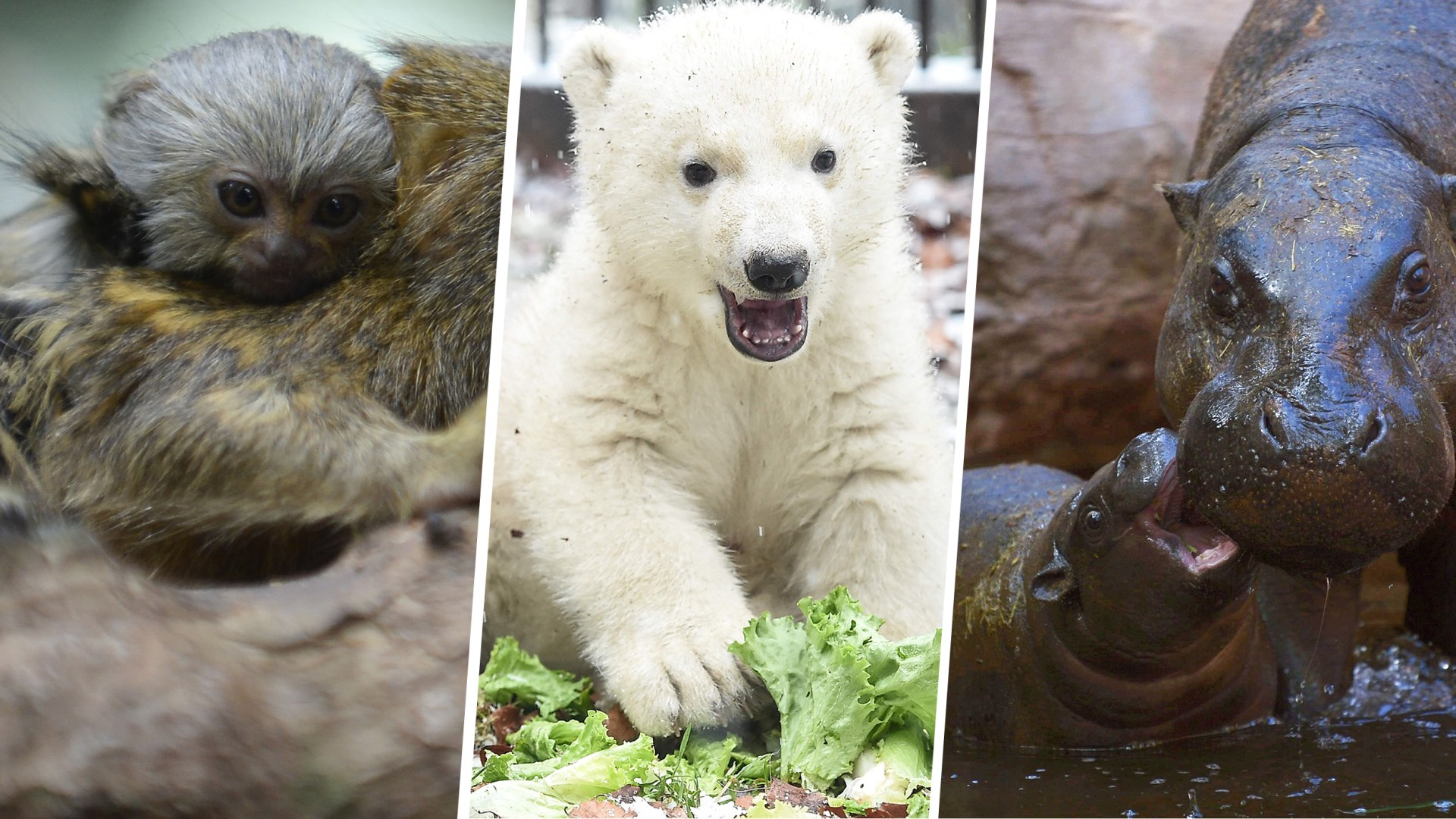 See these happy baby animals in this week's best animal ...
