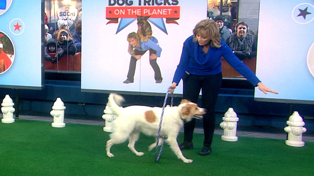 learn how to teach your dog some cool tricks