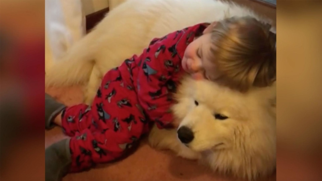 Baby and Samoyed dog are the most adorable cuddle buddies ...