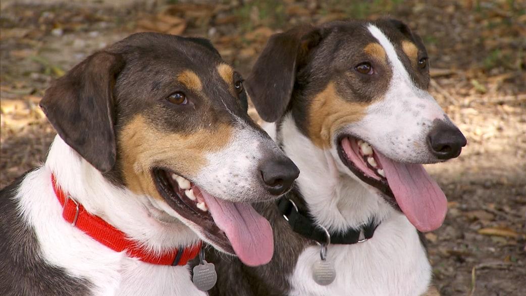 Pet Dog Cloning