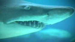 A Shark Attack Survival Guide