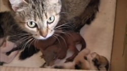 Cat Adopts Baby Squirrels As Her Own