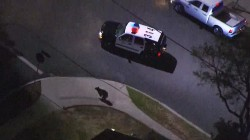 Video: Young bear jumps fences, leads police on hour-long chase