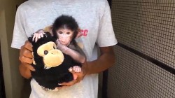 Cute Baby Baboon Gets Monkey Friend After Being Abandoned