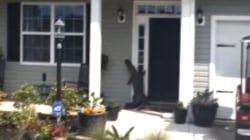See an Actual Alligator Ring a Doorbell