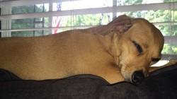 Pets Overdosing on Pot