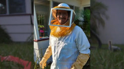 Florida man stung 150 times trying to vacuum up bees