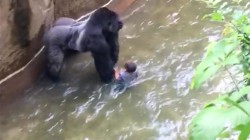 Al Roker on gorilla shooting: 'It's easy to judge' the mom