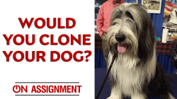 The Clone Zone: Would you clone your dog?