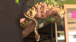 Thieves Snatch Snakes From Pet Store