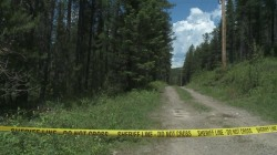 Search Continues for Bear in Fatal Attack