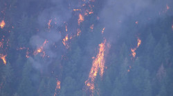 Trailhead Fire Grows to 650 Acres in California