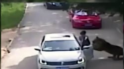 Shocking video shows tiger grab woman at park; another woman killed