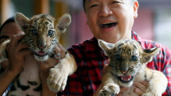 See Adorable Tiger Cubs Named After Philippines President and VP