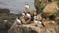 Puffin Awesome! New Iceland attraction lets you snorkel with the adorable birds