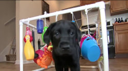Follow TODAY's new puppy with a purpose through a busy day of learning