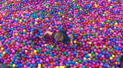 TODAY fan swims through ball pit seeking $25k 'gold ball for her Green Beret'