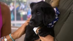 TODAY's new puppy with a purpose meets Kathie Lee and Hoda