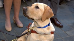 Welcome back Wrangler! See how TODAY's first puppy with a purpose is excelling