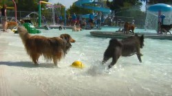 Watch this water park go to the dogs (literally)