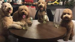 These 3 goldendoodles are best friends - and we want in