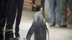 This penguin was promoted to Brigadier Sir in Royal Norwegian Guard