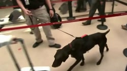 TSA dogs failing tests to sniff out explosives, investigation finds