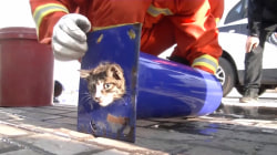 Cat Stuck in Narrow Pipe Rescued by Firefighters