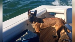 10-month-old puppy reunited with family after tumbling overboard