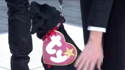 See TODAY's puppy Charlie as a Halloween Beanie Baby