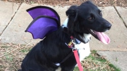 Happy Howl-oween: Pet Costumes Rule!