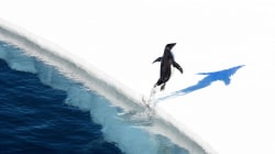 World's Largest Marine Reserve Created in Antarctica
