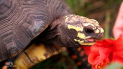 A Postcard from the Field: Turtle and Tortoise Rescue