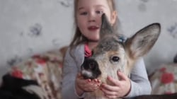This Family Adopted A Baby Deer as Family Pet