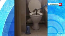 See the 8-foot poisonous snake found in one homeowner's toilet