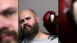 A parrot makes it into a man's mug shot in this week's Highs and Lows