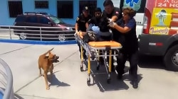 Loyal Dogs Refuse to Leave Injured Owner's Side After Accident