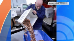 Man frustrated with DMV pays bill with 300,000 pennies