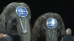 Ringling Bros. and Barnum and Bailey Circus to End After 146 Years