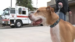 Terminally Ill Dog Tackles Buckle List