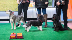 How smart is your dog? TODAY anchors put their pooches to the test!