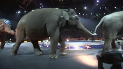 Ringling Bros. and Barnum and Bailey circus announces final days
