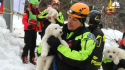 5 Days After Avalanche, 3 Puppies Are Rescued